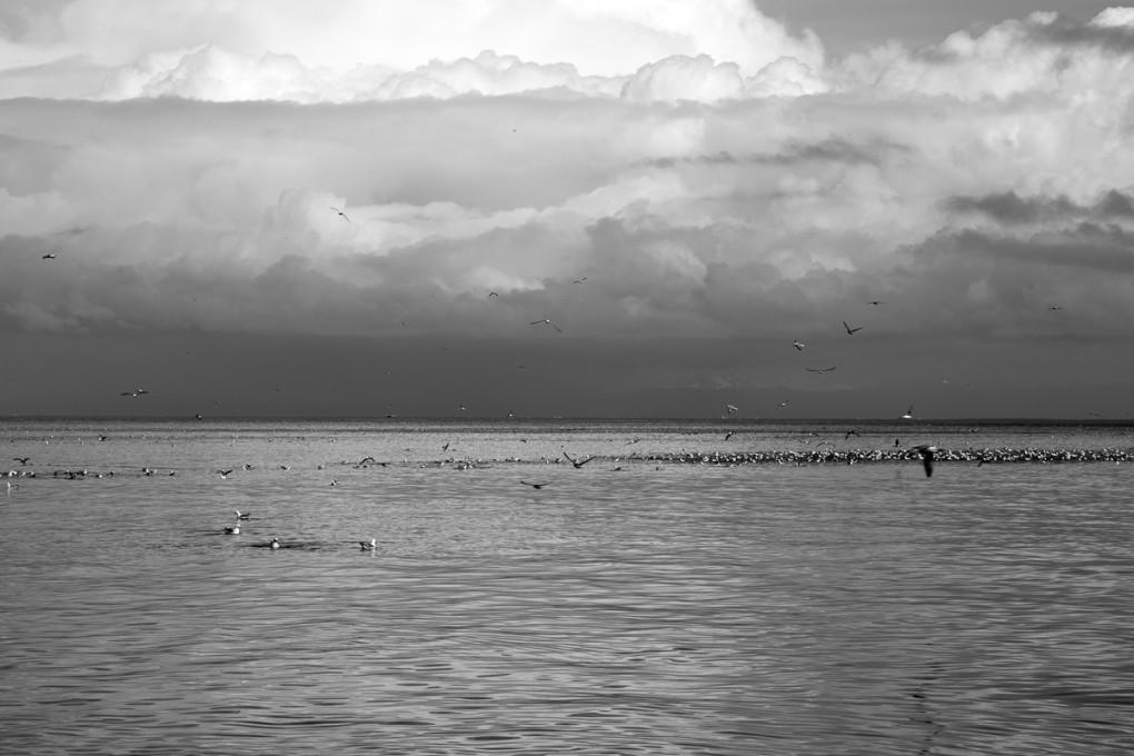 Fototur til Island. Sjøfugler